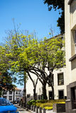 Little Garden with Trees at side of the Regional Government Offces in  the centre of Funchal on the Island of Madiera Royalty Free Stock Photography