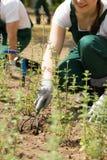 Little garden works. Young female gardener performing some gardening activities stock photos