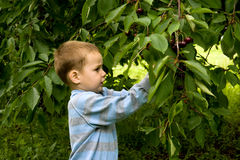 Little gardener 2 Royalty Free Stock Photography