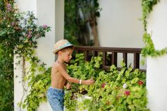 Little gardener Royalty Free Stock Photo