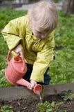 Little gardener. Little girl watering strawberry in the garden Royalty Free Stock Image