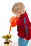 Little gardener boy Stock Images