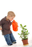 Little gardener boy Stock Images
