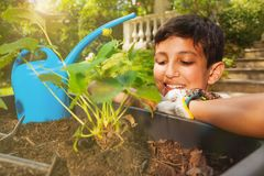 Little gardener waiting for his plant to grow royalty free stock image