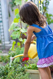 Little gardener watering flowers Stock Image