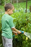 Little gardener at work. Seven years old boy spraying vegetables with a sprinkle Stock Photos