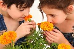 Little Gardeners Royalty Free Stock Image