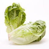 Little Gem lettuce Royalty Free Stock Photography