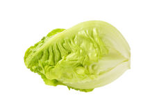 Free Little Gem Lettuce Royalty Free Stock Photography - 86297107