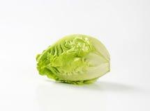 Little gem lettuce. Fresh little gem lettuce head Royalty Free Stock Photography