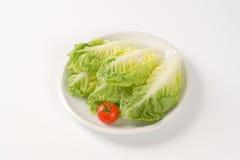 Little gem lettuce Stock Images