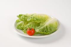 Little gem lettuce Royalty Free Stock Image