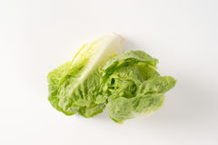 Little gem lettuce Stock Image