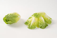Little gem lettuce Stock Photography
