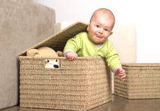 Little gift 11. A very cute 8-9 months old baby is playing with teddy bears in a basket. This is a full series of 14 photos, take a look at them all before you Royalty Free Stock Photography