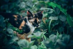 Little ginger kitten garden. Ginger kitten iready for jumping, Cat is hidden in the grass in the garden in the garden Stock Image