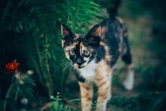 Little ginger kitten garden. Ginger kitten iready for jumping, Cat is hidden in the grass in the garden in the garden Royalty Free Stock Images