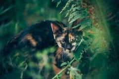 Little ginger kitten garden. Ginger kitten iready for jumping, Cat is hidden in the grass in the garden in the garden Stock Photography