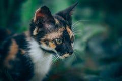 Little ginger kitten garden. Ginger kitten iready for jumping, Cat is hidden in the grass in the garden in the garden Stock Photos