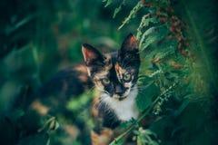 Little ginger kitten garden. Ginger kitten iready for jumping, Cat is hidden in the grass in the garden in the garden Stock Photo