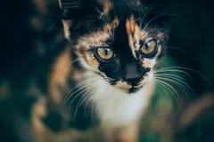 Little ginger kitten garden. Ginger kitten iready for jumping, Cat is hidden in the grass in the garden in the garden Royalty Free Stock Image