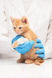 Little ginger kitten with leg in bandage at veterinarian Stock Photography