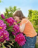 Little girl 3 years old smelling to flowers Royalty Free Stock Images