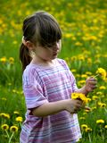 Little girl. In the flowering field Stock Image