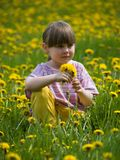 Little girl. In the flowering field Royalty Free Stock Photos