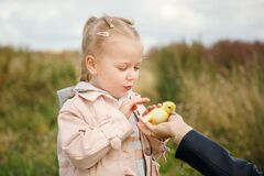 Free Little Girl Admires The Little Duckling Stock Images - 190765324