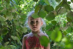 Little girl adventure in common hazel shrubbery hedgerow. In summer day royalty free stock image