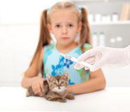 Little girl afraid for her kitten Royalty Free Stock Photography