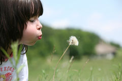 Little Girl And Dandelion Stock Photography