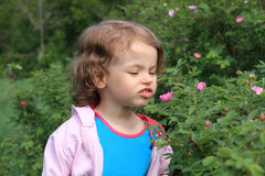 Little Girl And Flowers Of Wild Rose. Royalty Free Stock Photos