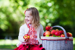 Little girl with apple basket. Child picking apples on a farm in autumn. Little girl playing in apple tree orchard. Kids pick fruit in a basket. Toddler eating Stock Photo