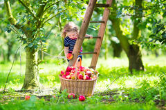Little girl in an apple garden Stock Image