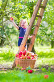 Little girl in an apple garden Stock Photos