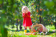 Little girl in an apple garden Stock Photo