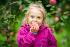 Little girl in the apple garden Royalty Free Stock Photography