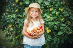 Little girl in the apple garden. Happy little girl holding apples in the garden Stock Photo