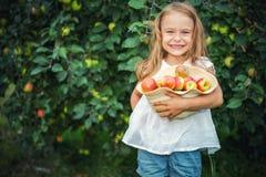 Little girl in the apple garden. Happy little girl holding apples in the garden Royalty Free Stock Images