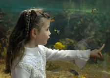 Little girl and aquarium Royalty Free Stock Photo