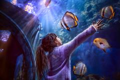 Little girl in the Aquarium. Little girl is looking through glass at sea fishes in the Aquarium in Moscow