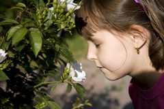 Little girl and aroma of the rose Stock Image