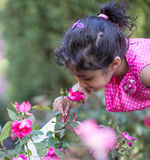 Little Girl Attempting to Smell a Rose in the Garden. Outdoors Stock Photography