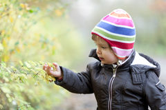 Little girl in autumn. A little girl is picking a berry Stock Photography