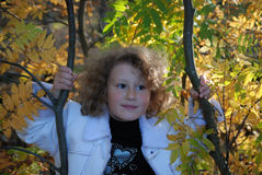 Little girl with autumn leaves Royalty Free Stock Images