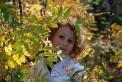 Little girl with autumn leaves. In hands Royalty Free Stock Image
