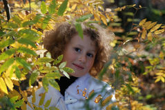 Little girl with autumn leaves. In hands Royalty Free Stock Photo