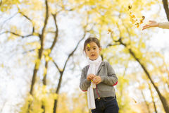 Little girl in the autumn park. Cute little girl in the park at autumn royalty free stock photo